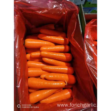 New Crop Fresh Carrot Of 2019